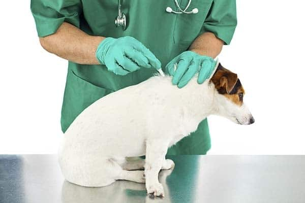 ambulatorio veterinario pronto soccorso san donà di piave