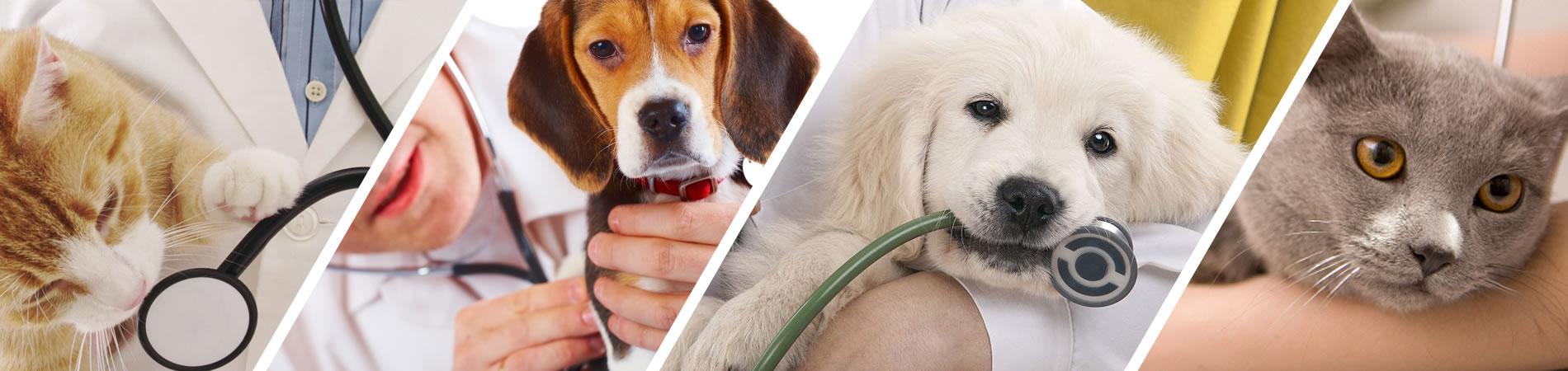 appuntamento veterinario san donà di piave